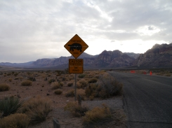 Scenic Drive - Red Rocks